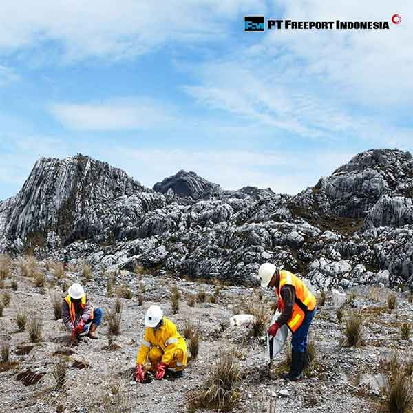 iklan perusahaan pt freeport indonesia